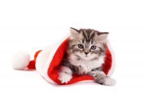 cat_christmas_hd_photo_gallery4