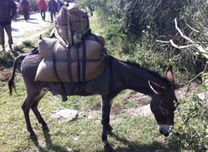 ethiopia-pack-donkey-m-upjohn
