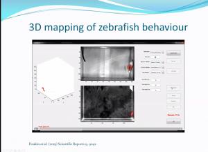 Image 1: 3D mapping of zebrafish behaviour (Sneddon)